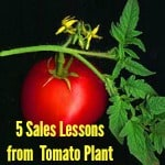 5 Sales Lessons from a tomato plant with tomato and blossom on it