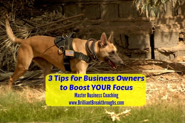 Boost Focus for Business Owners is illustrated by a military trained German Shepard dog with full military harness and an American Flag patch sniffing a pith in a desert location.