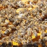 Business Coaching by BrilliantBreakthroughs.com Busy Business Owners success illustrated by a bees crawling all over their hive.