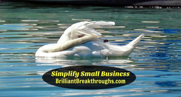 Business Coaching by Brilliant Breakthroughs, Inc.: Spring Cleaning illustrated by a Swimming Swan cleaning its wing feathers.
