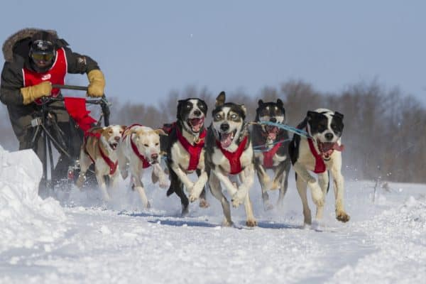 Small Business Coaching by Brilliant Breakthroughs, Inc. : Wolf Pack Management illustrated by a dogsled team and musher.