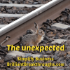 unexpected brown baby rabbit along railroad tracks
